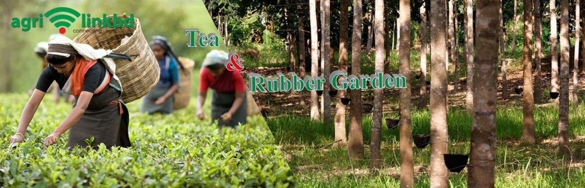 Tea & Rubber Garden