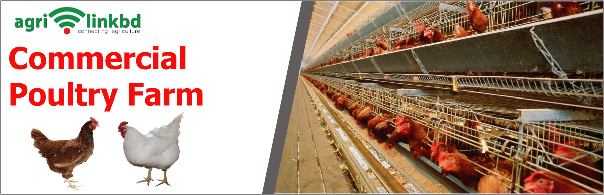 Commercial Poultry Farm