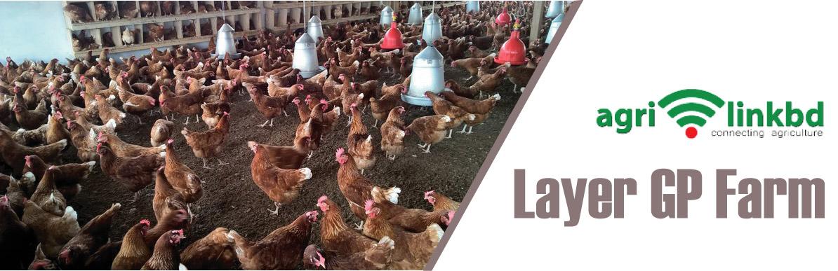 Layer GP Farm